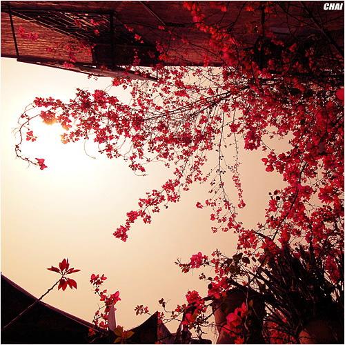 爬上墙头等红杏