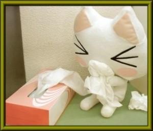 腹痛·汗滴·以及猫